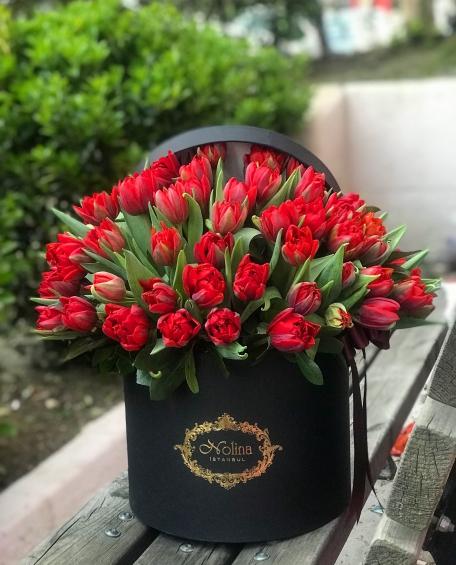 Kırmızı Lale Güzelliği