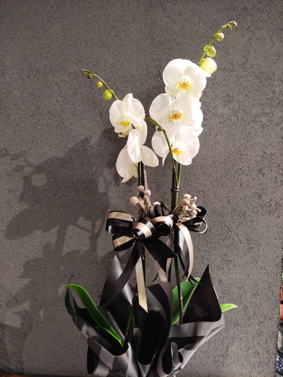 Orkide Çift Dallı Beyaz