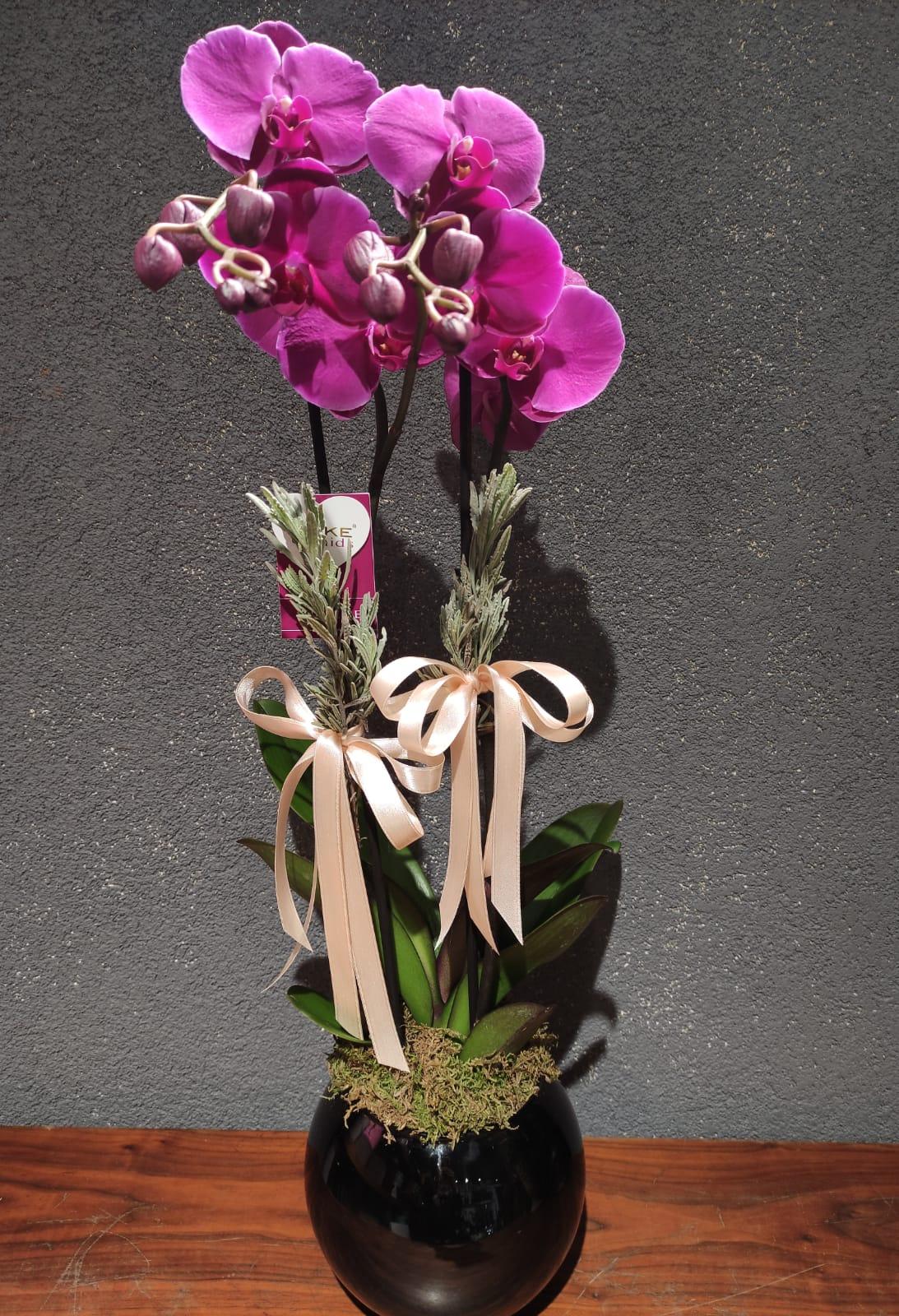 Çift Dallı Fuşya Orkide