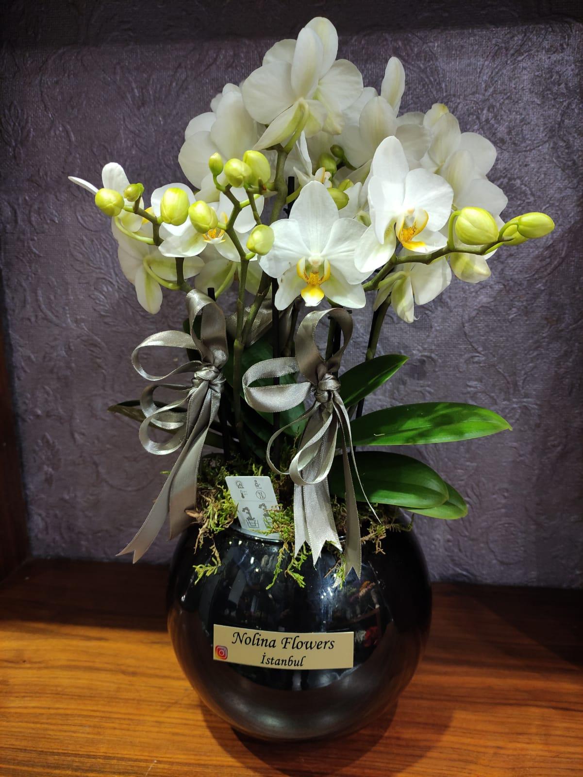 Orkide Optimal Care