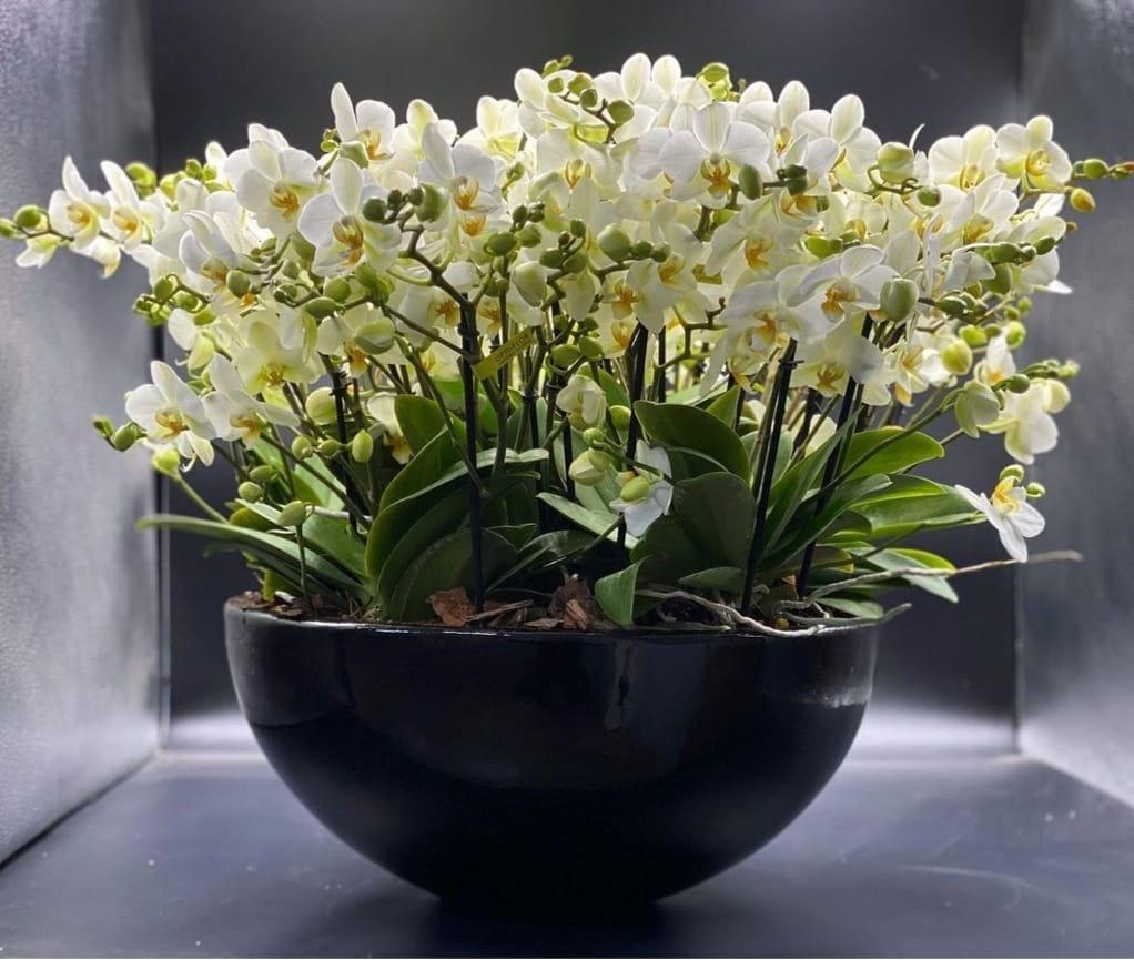 Özel Boguetto Orkide